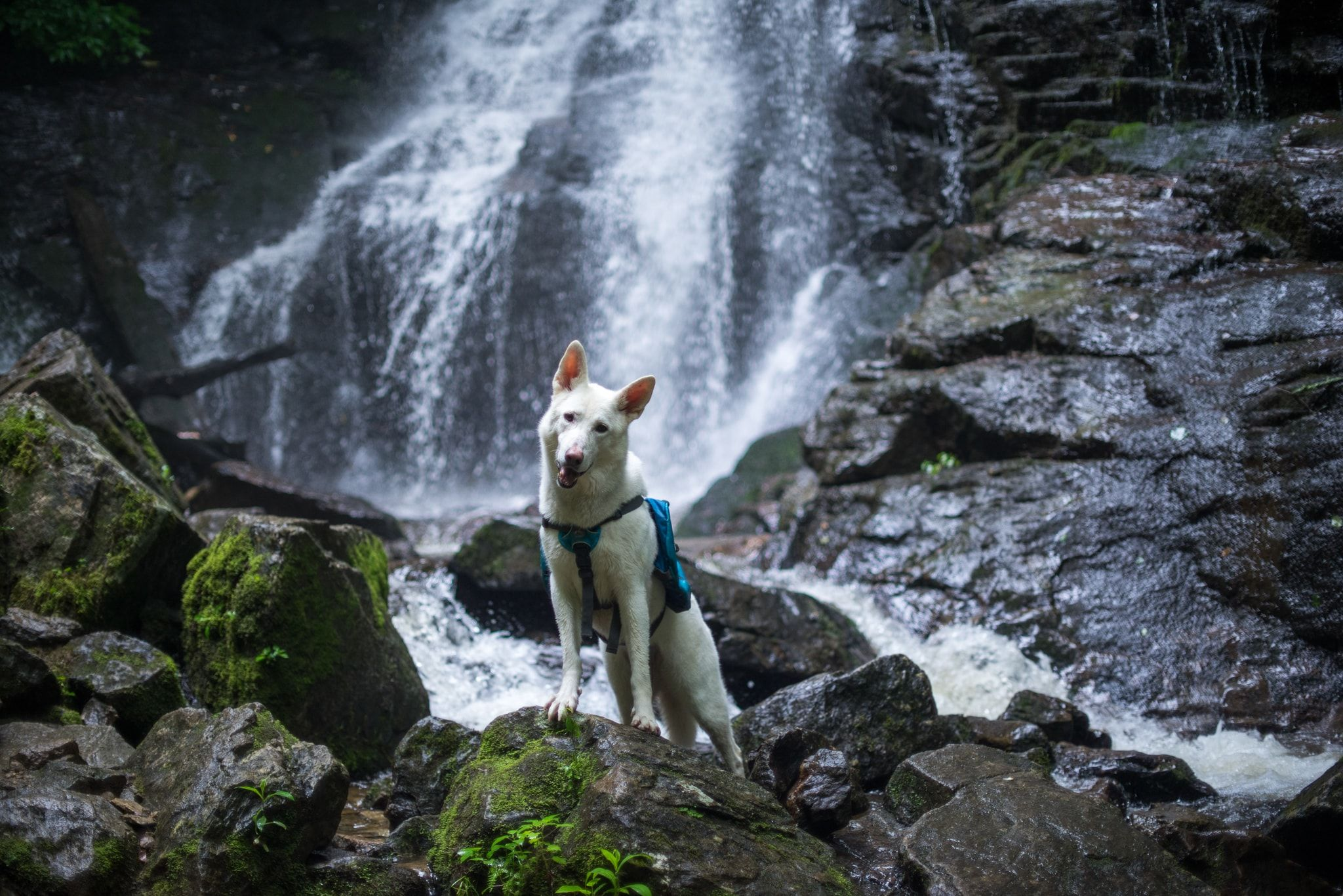 Dog friendly hikes in oregon in 2020 hiking dogs oregon