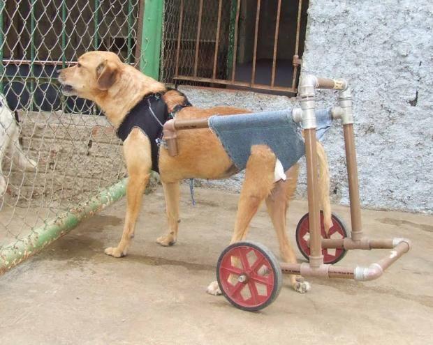 Conhecido como fazer coleiras para cachorro material reciclado - Pesquisa  ZA31
