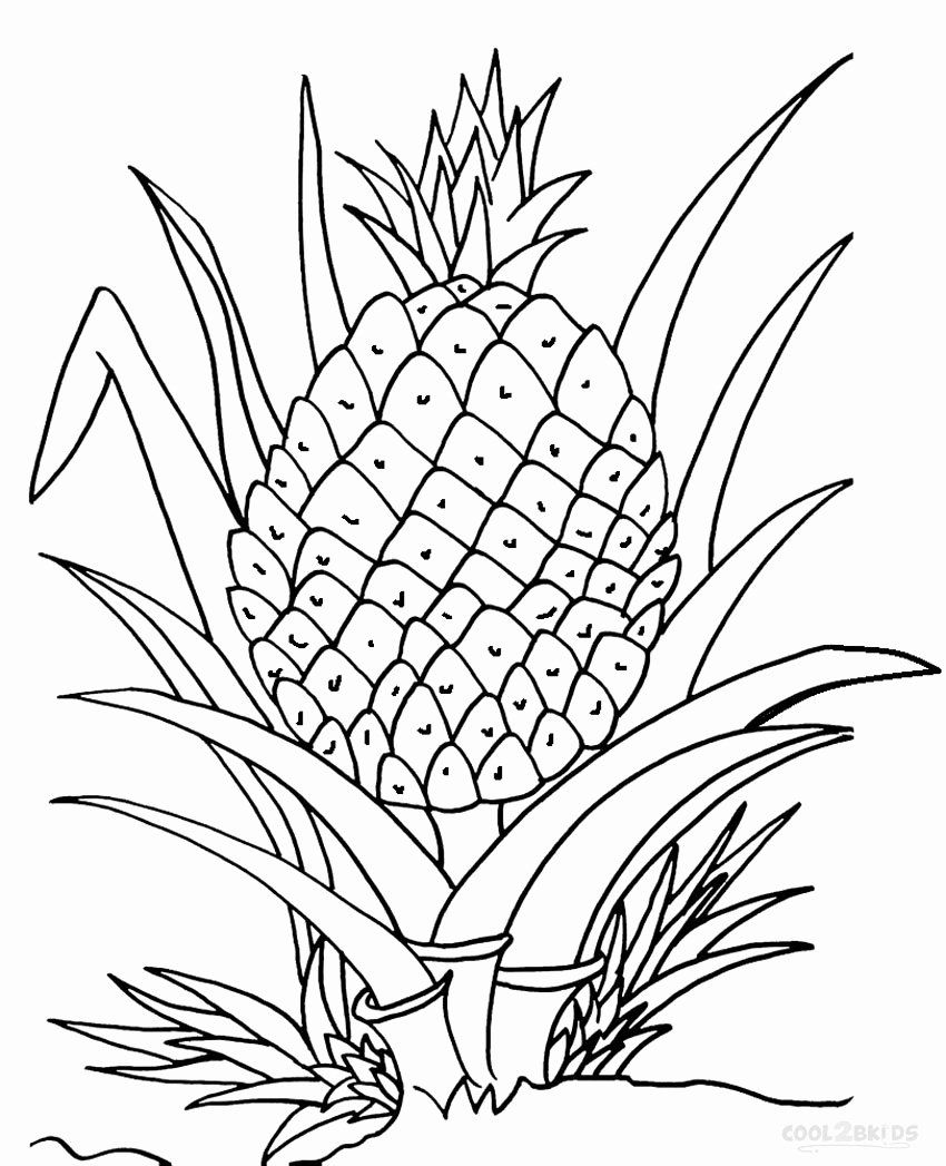 Cute Pineapple Coloring Page Best Of Pineapple Line Drawing At