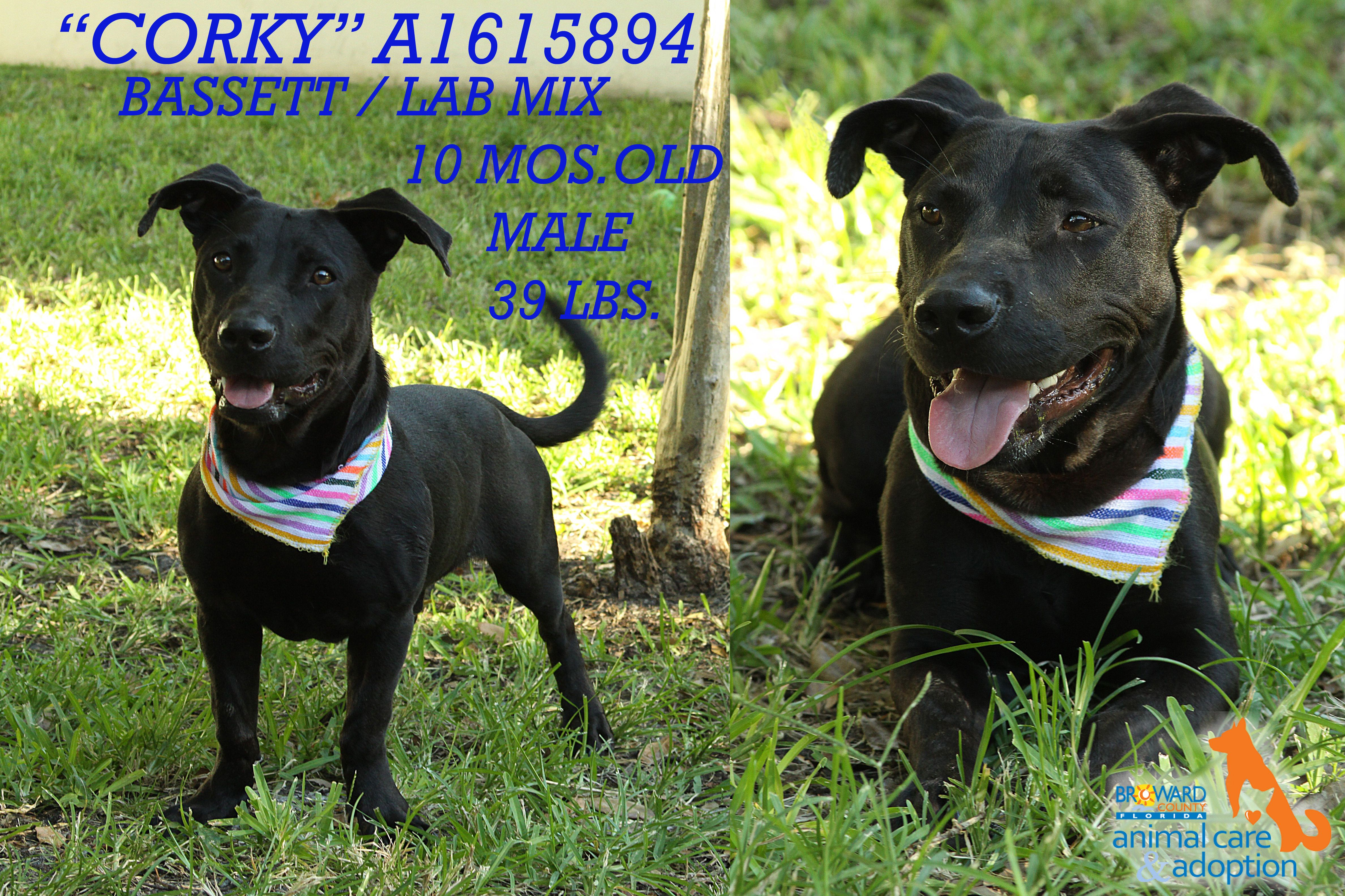 Pin on Dogs for AdoptionBroward County