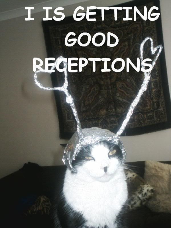 Image result for tinfoil lolcat