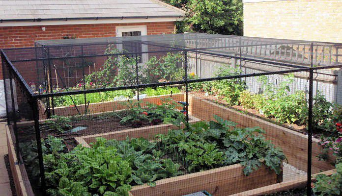 Fruit Cage Steel For Raised Beds Customer Projects