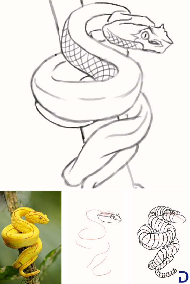 Comment Dessiner Un Serpent Dessin Serpent Dessin Comment Dessiner
