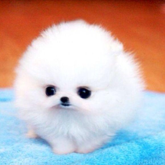 Omg So Cute Cutest Paw Cute Baby Animals Puppies