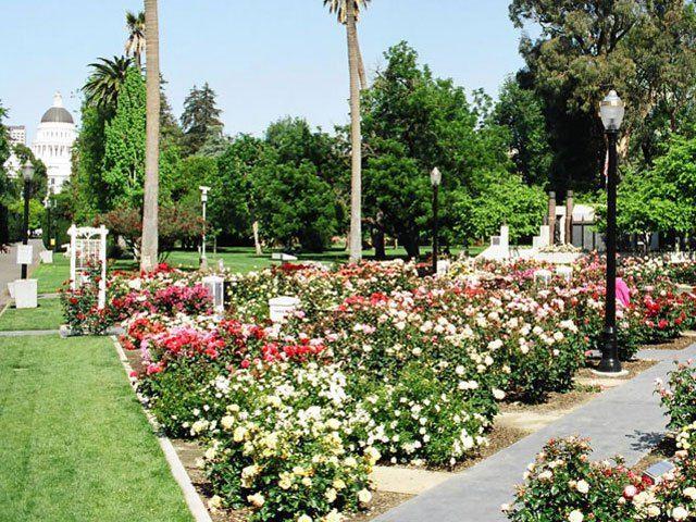 Incroyable McKinley Park And Rose Garden 3330 McKinley Blvd. Sacramento, CA 95816  (916) 277 6060 Www.cityofsacramento.org