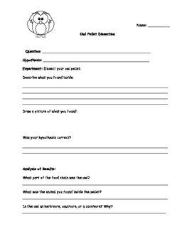 Owl Pellet Dissection Worksheet Answers - Worksheets