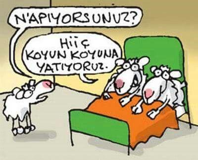 Koyun Koyuna Karikatur Komik Espriler