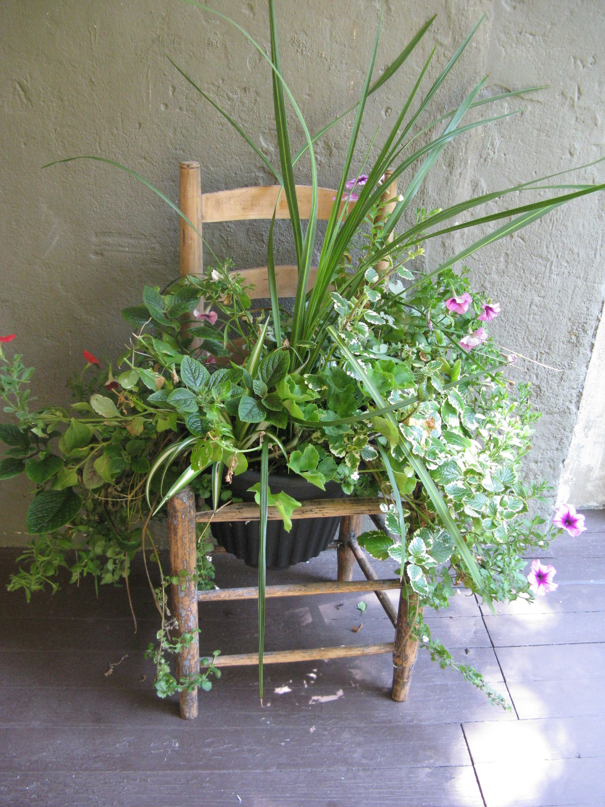 Antique ladder back chair used as planter.