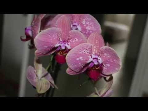 Ne Jetez Pas Votre Orchidee Youtube Rempoter Orchidee