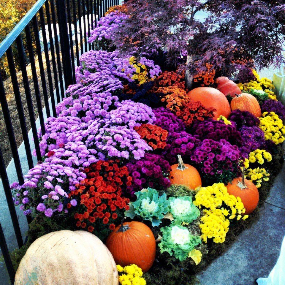 Fall Landscaping, Backyard Landscaping