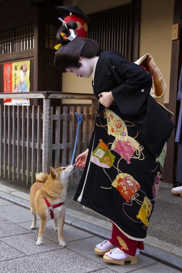 "geisha-kai: "" Geiko Momokazu on the day of her erikae with cute dog Chiro who lives in Nishimura okiya (SOURCE) """
