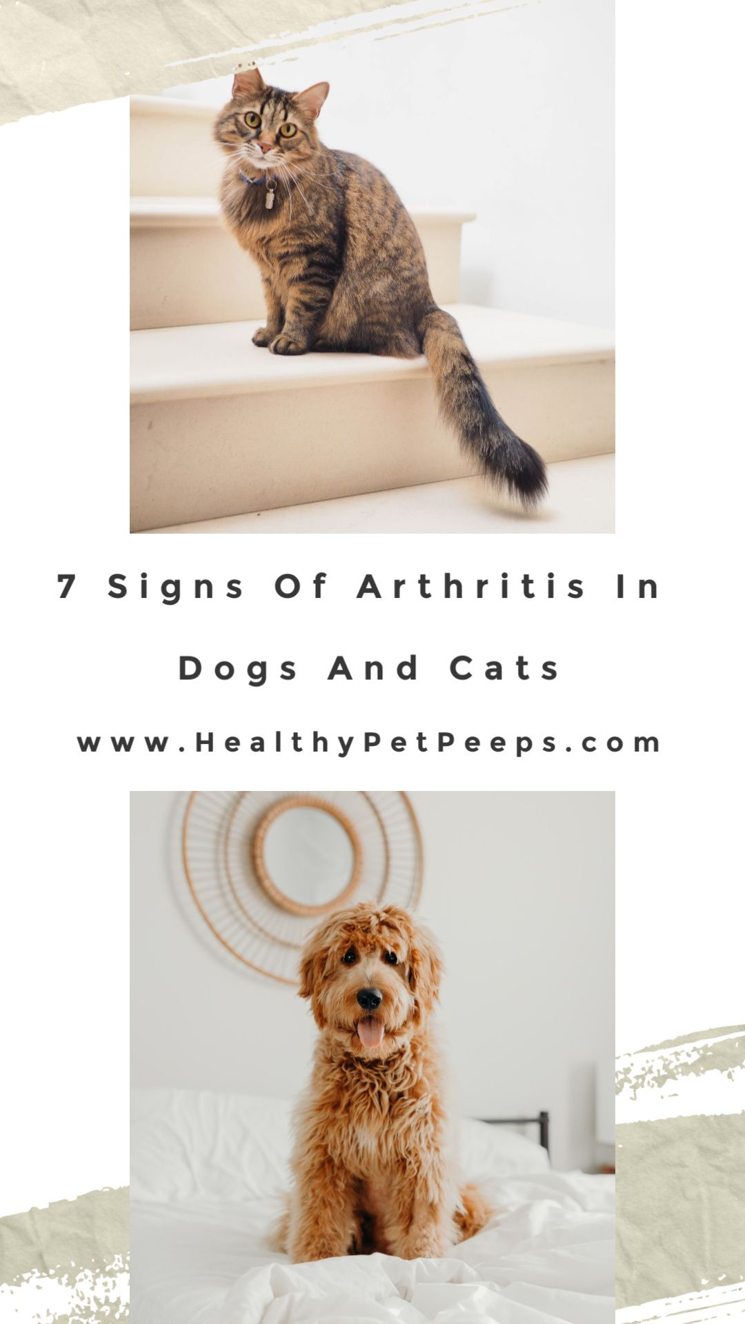 7 Signs Of Arthritis In Dogs And Cats In 2020 Dog Cat Cats And Kittens Cat Mom