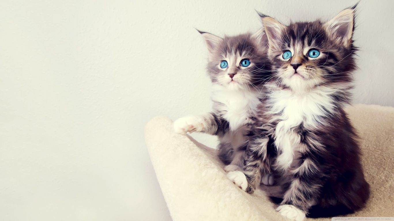 Cute Animal Wallpapers For Desktop Background Full Screen