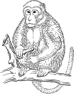 Links To Rainforest Coloring Pages Jungle Coloring Pages