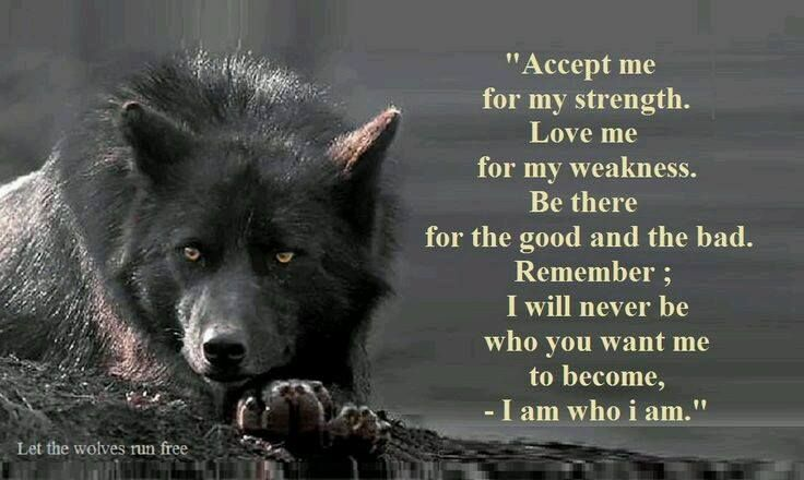 Pin By Melly Rocky On Wolves Storytelling Quotes Warrior Quotes Wolf Quotes