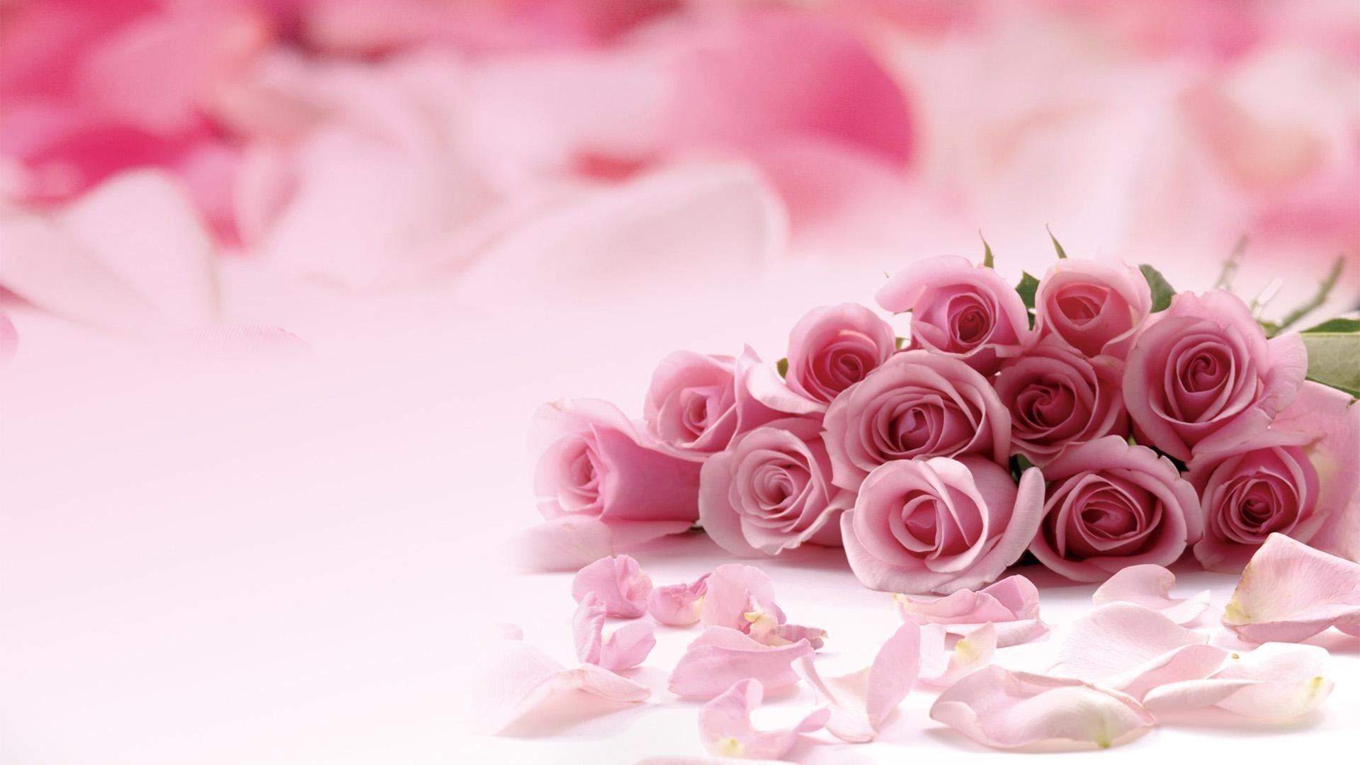 pink roses picture hd desktop wallpaper 1920x1080 pink