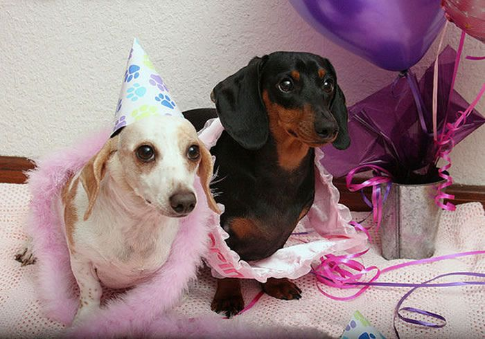 Pampering Your Pets How Much Is Too Much My Pet Warehouse Pet Blog Your Pet Pet Warehouse