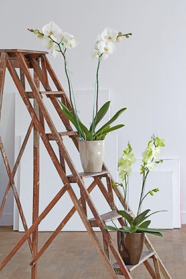 Feng Shui Pflanzen Wohnideen Orchideen | Orchideen | Pinterest