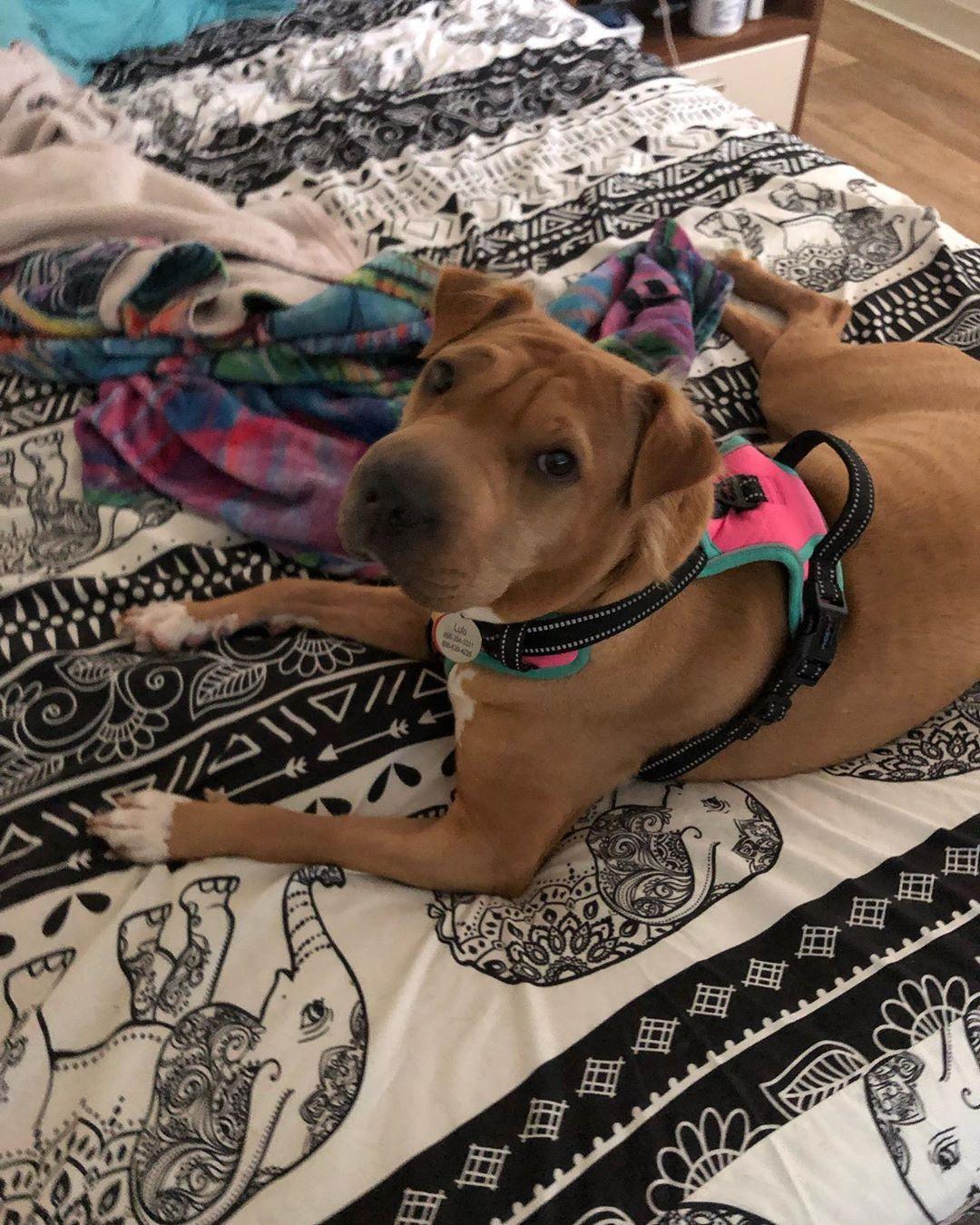 Cutie dogmom puppylove lulu mygirl queenlulu