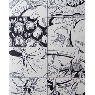observational drawing plants basic - Google Search