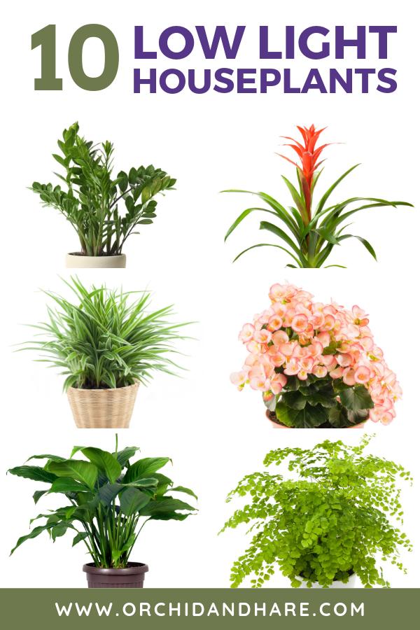 10 Low Light House Plants Plants Low Light House Plants Indoor