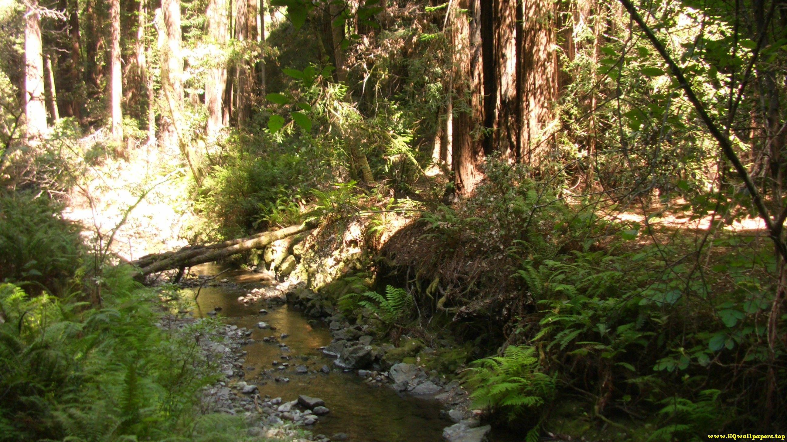 Muir Woods Fern Creek