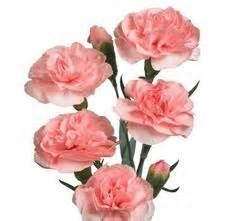 Pink Carnation Meaning Yahoo Image Search Results Mini Carnations Carnation Flower Pink Wedding Flowers