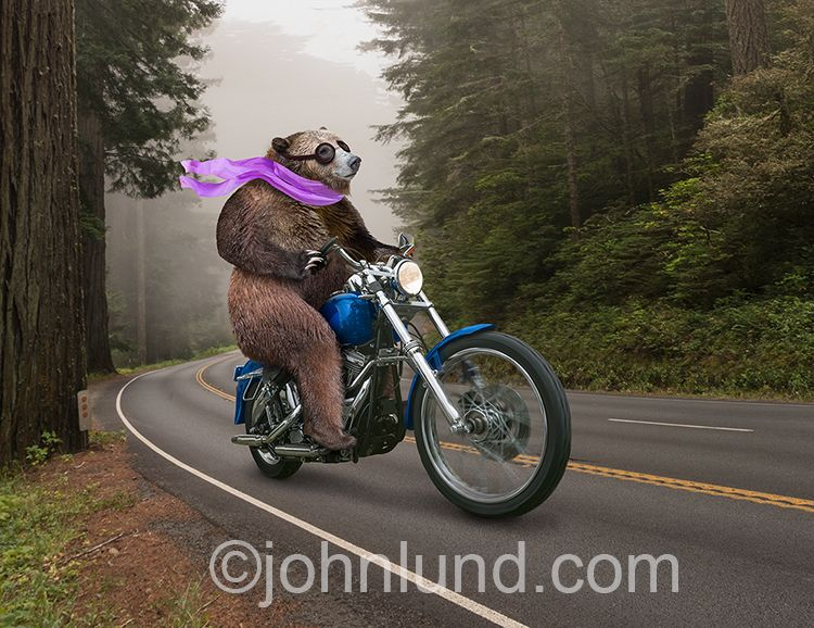 Bear Rides Bear And Cums