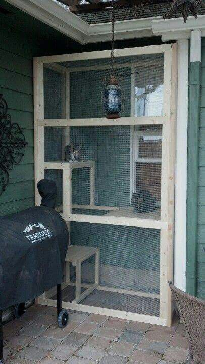 Indoor Cats Enjoying Time Out Side Inside Cat Diy Cat Enclosure Cat Patio