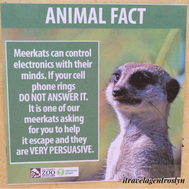 Someone Posted These Hilarious Animal Facts All Over The Los Angeles Zoo #hilariousanimals
