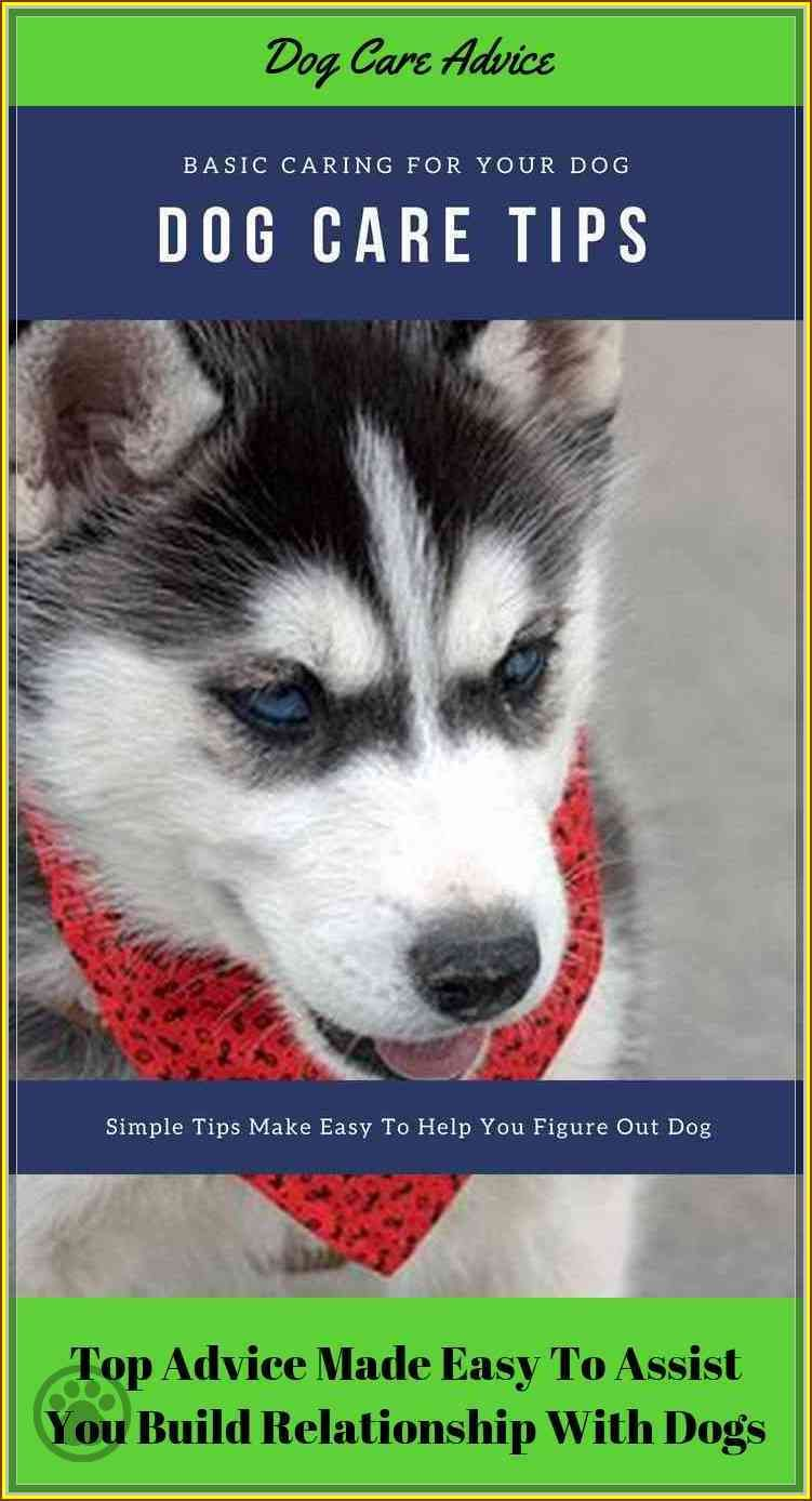 Allay Your Concerns With This Dog Care Advice Dog Care Dog Care