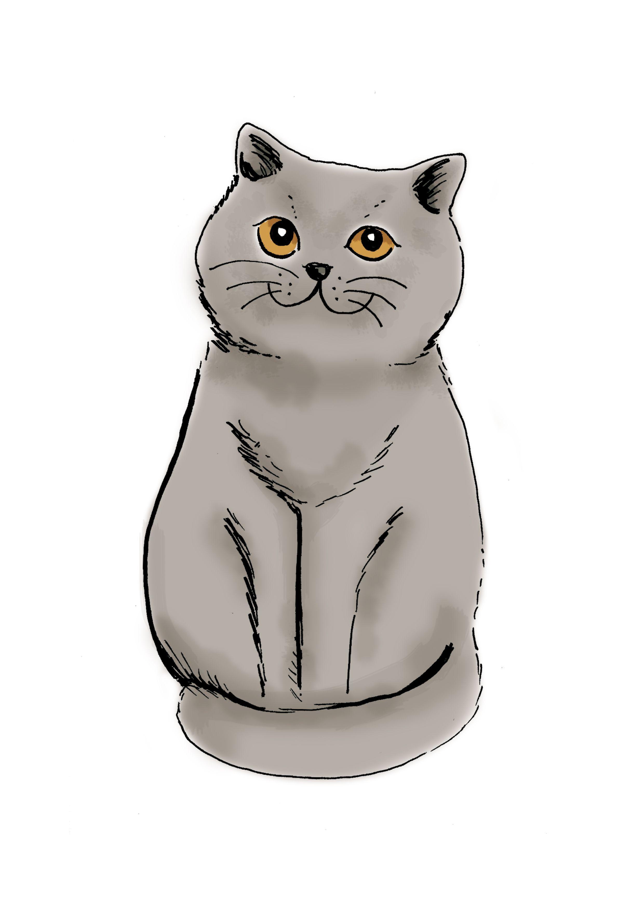 British Shorthair Illustration Lorene Russo Catsdiydrawing
