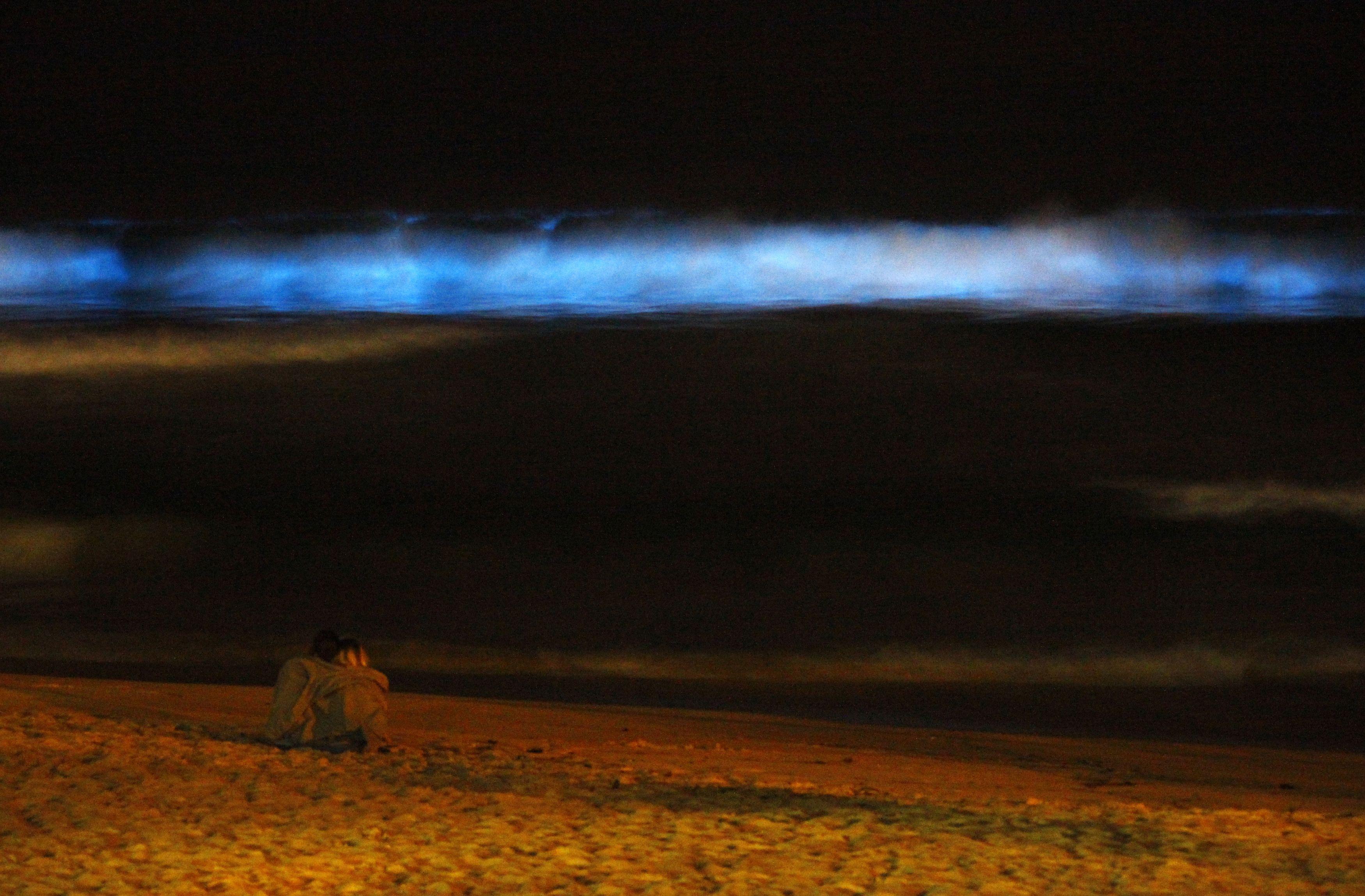 Pantai Manly di Sydney, Australia memancarkan gelombang