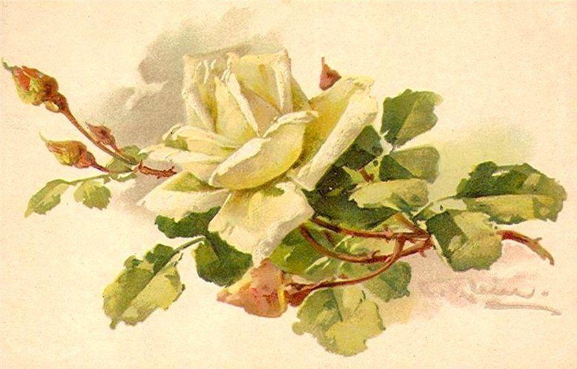 Роза старые открытки, днем добра