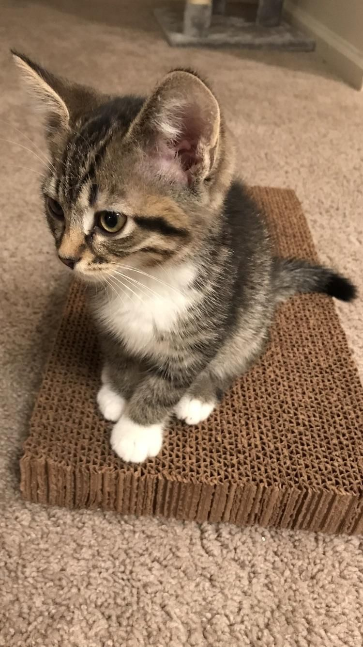 Mittens is getting better 🎉 Cute cats, Cute animals