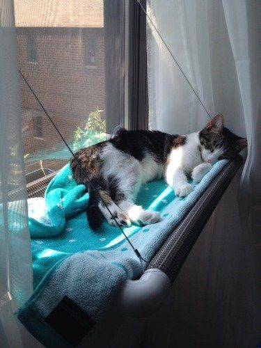 Cat Window Hammock Placed Concept