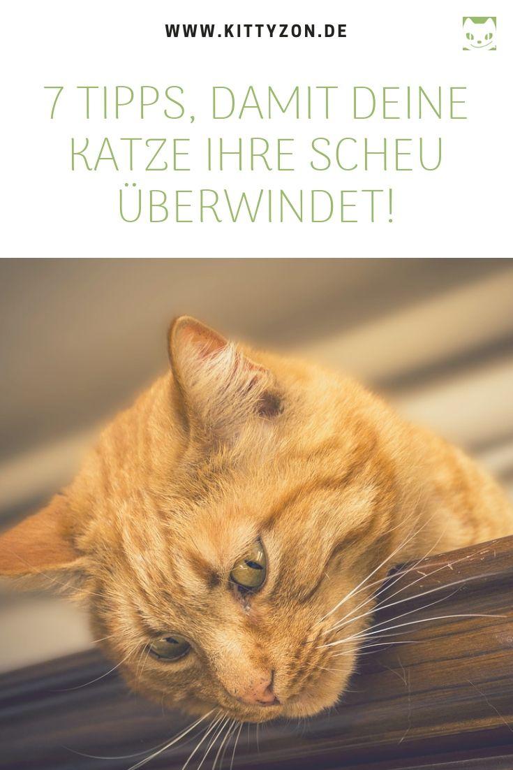 Hat Deine Katze Angst Diese 7 Tipps Helfen Katzenverhalten