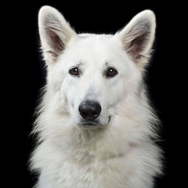 Animal Personal Portraits -6