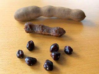 Tamarindus indica of tamarinde is een boom uit de Fabaceae familie, afkomstig uit tropisch Afrika. Hij produceert eetbaar fruit in de vorm van peulen die zowat overal ter wereld in de keuken gebruikt worden. De vrucht is...... Read More