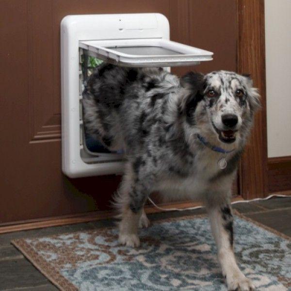 Dog Door Flaps Microchip Images Doors Design Modern