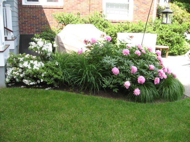 Sarah bernhardt peonies azalea stella doro lilies and sarah bernhardt peonies azalea stella doro lilies and ornamental grassesgarden designfront workwithnaturefo
