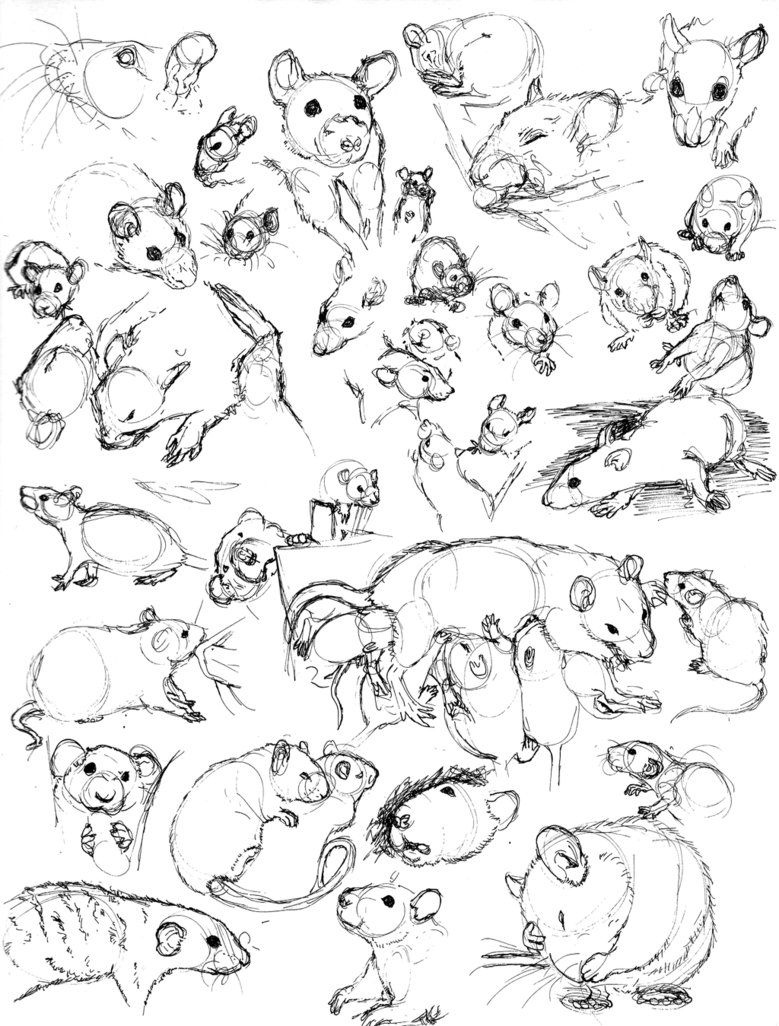 Uncategorized How To Draw Rats rat sketch practice 8 by never mor banda desenhada ratos drawing stuff