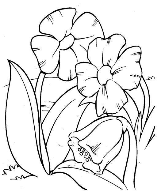 картинки   Книга цветы, Раскраски и Цветы
