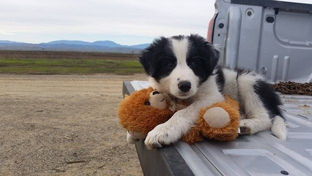 16 Ways To Bond With Your Dog Collie Puppies Puppy Breeds Dogs