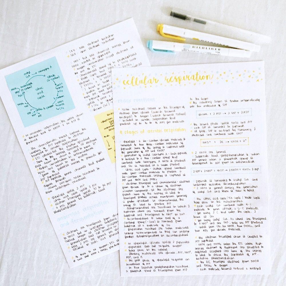 Pinterest Caffeinecatss Tumblr Behavi0r Via Http Studyblr Tumblr Com Study Notes Notes Inspiration Study Hard