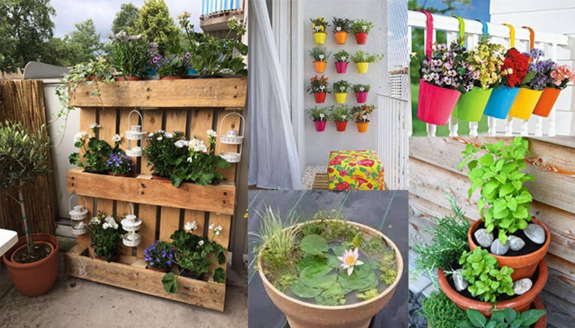 Znalezione Obrazy Dla Zapytania Plotek Na Balkon Plants