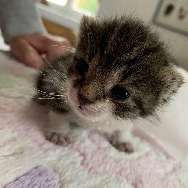 miniKatz Das erste Baby des Jahres für uns Die kleine