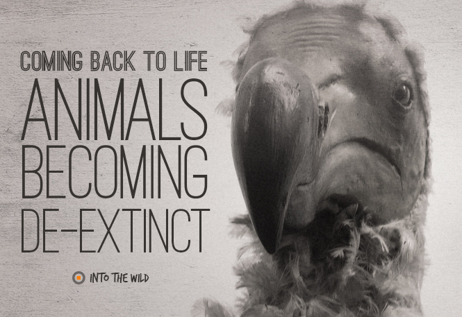 These 4 animals might be brought back to life! Imagine a