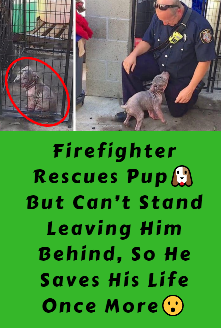 Firefighter Rescues Pup But Can't Stand Leaving Him Behind