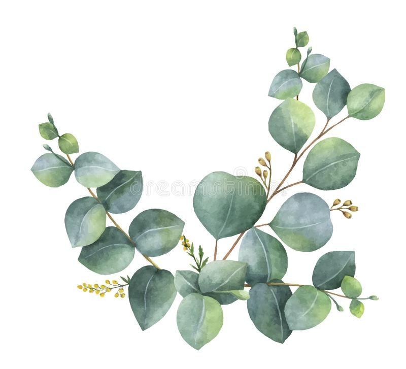 Relatert Bilde Watercolor Floral Pattern Eucalyptus Eucalyptus Leaves